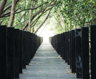 Long wooden pathway with mangrove forest covering above Stock Image