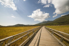 A long wooden plank road. In the marsh park Royalty Free Stock Photos