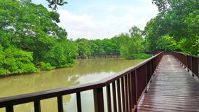 Free Long Woonden Walk Way Bridge In Mangrove Green At Bangkrachao Area Royalty Free Stock Photography - 58954177