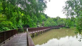 Long wooden walk way bridge in mangrove green at Bangkrachao area Royalty Free Stock Image