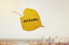 Long yellow leaf with the inscription AUTUMN Stock Image