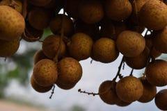 longan的果子 免版税库存图片