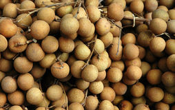 Longan. Fruit - Longan stock images