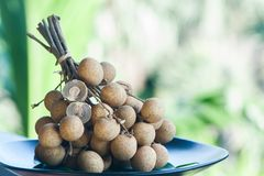 Longan. Dimocarpus longan. Branch longan fruit whole fruits and in a cut. Stock Photography