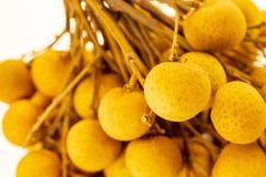 Longan Dimocarpus gałąź świeża owoc Tajlandia mnóstwo małych owoc Asia wyatnam soczysty wyśmienicie deserowy malasia obrazy royalty free