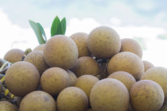 Longan dragon eye fruits Stock Images