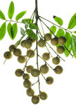 Longan Royalty Free Stock Photo