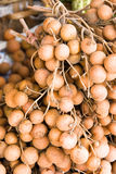 Longan fruit. Delicious looking longan fruit for sale Royalty Free Stock Image