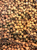 Longan fruit Stock Photography