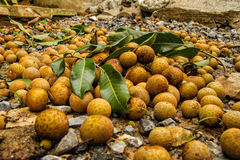 Longan. Fruit is sweet and kind to northern Thailand Royalty Free Stock Images