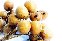 Longan fruits Royalty Free Stock Image
