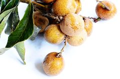Longan fruits Stock Images