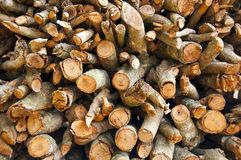 Longan log storage Stock Image