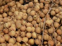 Longan na gałąź, tropikalna owoc fotografia royalty free