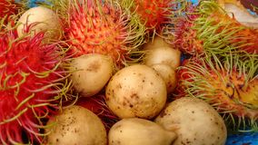 Longan And Rambuthan Fruits Stock Photography