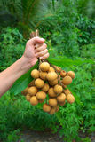 Longan tropical fruit Royalty Free Stock Images