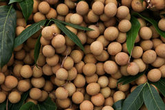 Longan, tropical fruit Royalty Free Stock Photography