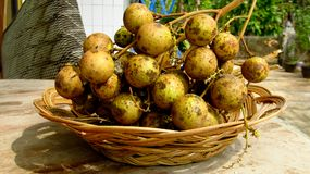 Longanfruit Diamond River Varieti stock afbeeldingen