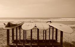 Longboards die van de Zon geniet Stock Afbeeldingen