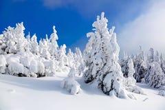 Longe nas montanhas altas cobertas com o suporte branco da neve poucas árvores verdes nos flocos de neve mágicos Imagem de Stock Royalty Free