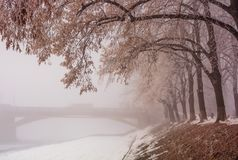 Linden alley on winter foggy morning. Longest in Europe linden alley on winter foggy and frosty morning. Mysterious scenery near the Masaryk bridge in Uzhgorod Stock Photos