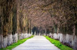 Longest european linden alley in springtime. Longest linden alley in europe. Springtime scenery on the river embankment in Uzhgorod, Ukraine Royalty Free Stock Photography