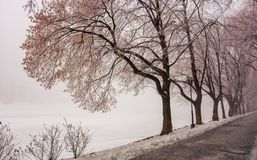Longest european linden alley in winter. Longest linden alley in europe. Winter scenery on the river embankment at foggy sunrise in Uzhgorod, Ukraine Stock Images