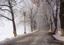 Longest european linden alley in winter. Longest linden alley in europe. Winter scenery on the river embankment at foggy sunrise in Uzhgorod, Ukraine Stock Photos