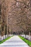 Longest european linden alley in springtime. Longest linden alley in europe. Springtime scenery on the river embankment in Uzhgorod, Ukraine Stock Image