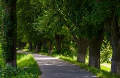Longest european linden alley. Longest linden alley in europe on the Uzh river embankment royalty free stock images