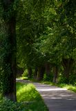 Longest european linden alley. Longest linden alley in europe on the Uzh river embankment Royalty Free Stock Photography