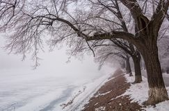 Longest european linden alley in winter. Longest linden alley in europe. Winter scenery on the river embankment at foggy sunrise in Uzhgorod, Ukraine Royalty Free Stock Photo