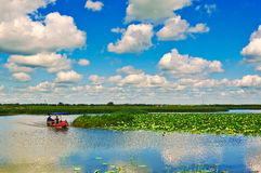 The Longfeng marsh lotus pond Stock Image