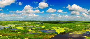 The Longfeng marsh panorama Royalty Free Stock Photography