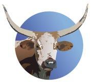 Longhorm Steer Stock Image