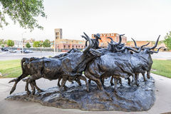 Longhorn cattle drive statue in Fort Worth, Tx, USA Stock Image