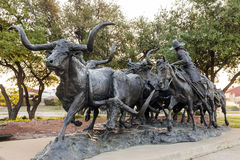 Longhorn cattle drive statue in Fort Worth, Tx, USA Royalty Free Stock Photography