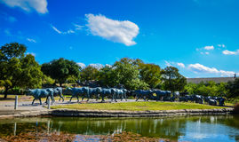 49 Longhorn Cattle Statues - Pioneer Plaza - Dallas, Texas Stock Image