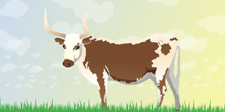 Longhorn Cow Background Stock Photo