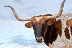 Longhorn e céu Fotografia de Stock Royalty Free