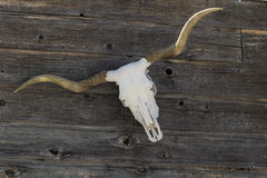 Longhorn-Schädel auf einem Zaun Lizenzfreie Stockfotografie