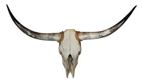 Longhorn Skull Stock Photo