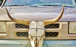 Longhorn skull car bumper Royalty Free Stock Photo