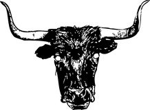 Longhorn steer. With hairy or furry face Stock Photography