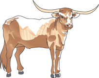 LONGHORN STEER Royalty Free Stock Photos