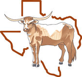 LONGHORN TEXAS STATE Stock Photos