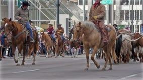 Longhorn-Vieh in der nationalen westlichen Show-Parade auf Lager. stock footage