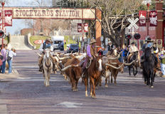 Longhorns cattle drive at the Fort Worth Stockyards. Stock Images