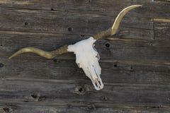 Longhornschedel op een omheining royalty-vrije stock fotografie