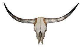 longhornskalle Arkivfoto